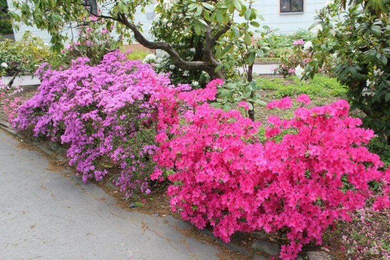 Ботанический сад в пражском Вышеграде