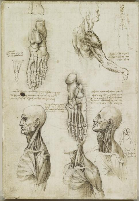 Анатомические наброски безумного гения Леонардо да Винчи.