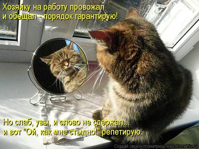 kotomatritsa_nP (700x524, 307Kb)