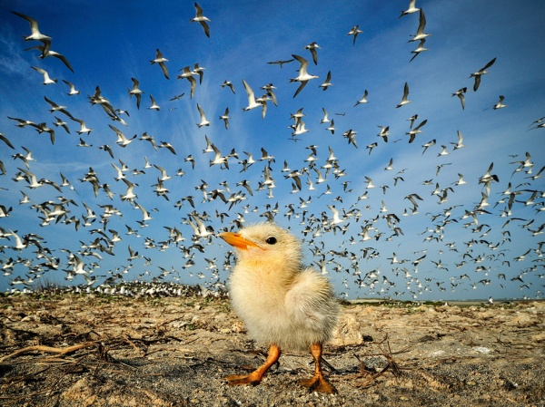 Шедевры National Geographic