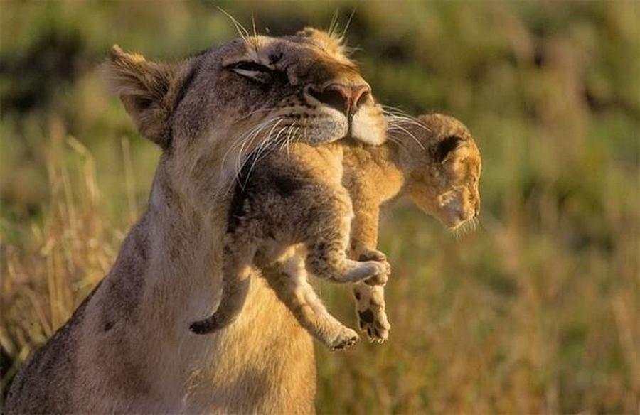 Мама — великое слово!