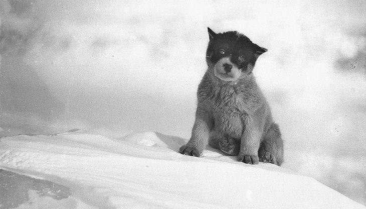 Уникальные фотографии из первой Австралийской антарктической экспедиции 1911-1914 годов