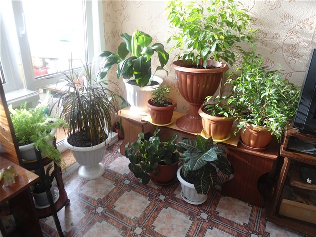Отдельный горшок для каждого растения