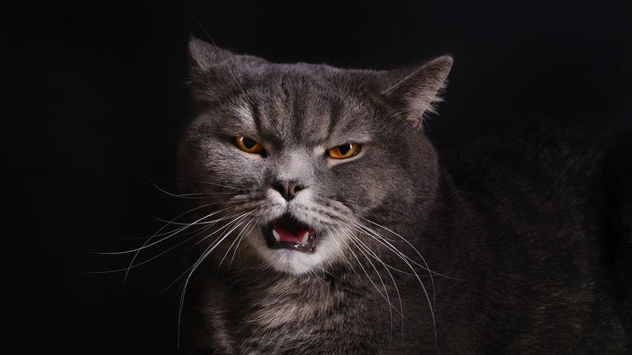 Демонические котики