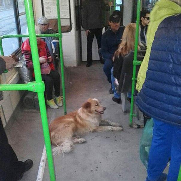 Пес № 13... История собаки, поразившая Новосибирск