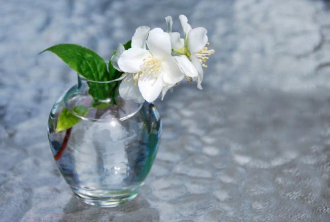 Кустарник жасмин. Даже одна веточка чубушника в вазе смотрится красиво, и может изящно украсить, например, ваш рабочий стол или туалетный столик, и радовать вас дивным ароматом
