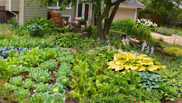 огородный дизайн