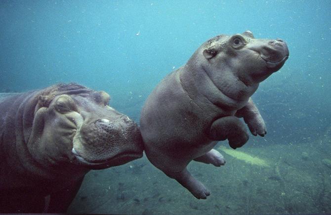 30 фотографий животных, которые вы просто обязаны увидеть