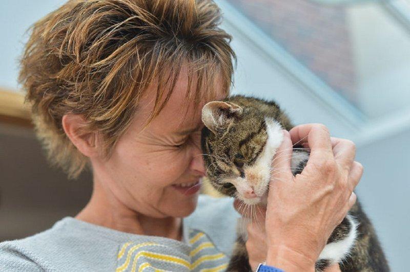 Кошка вернулась к хозяйке 13 лет спустя