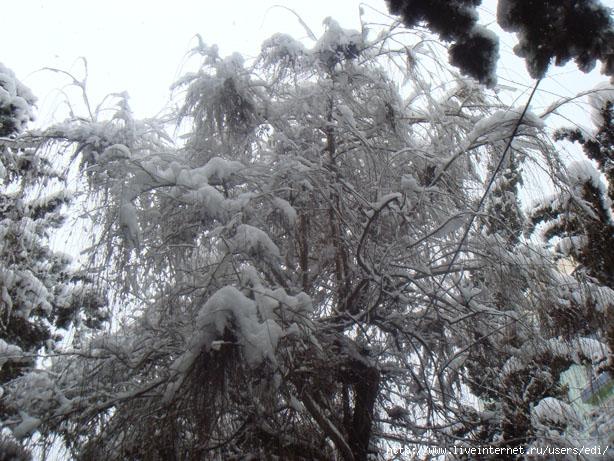 Снежные этюды: белая романтика