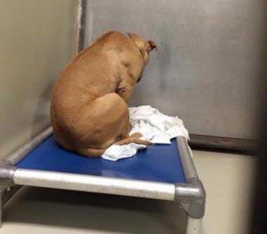 Душераздирающее фото собаки, после того, как её принятие в семью провалилось