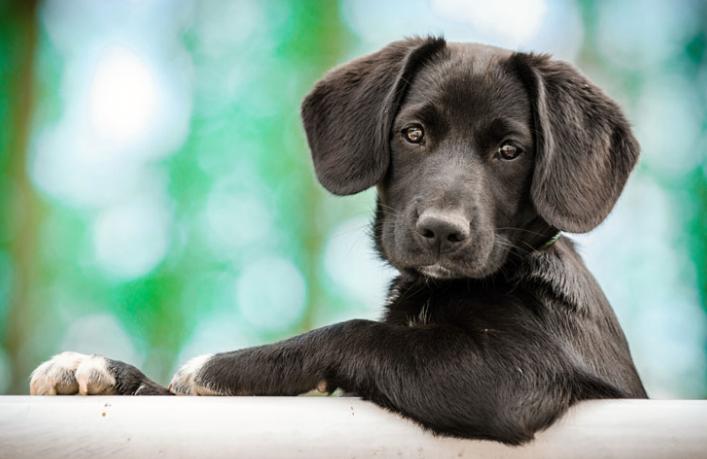 Картинки по запросу собаки помогут