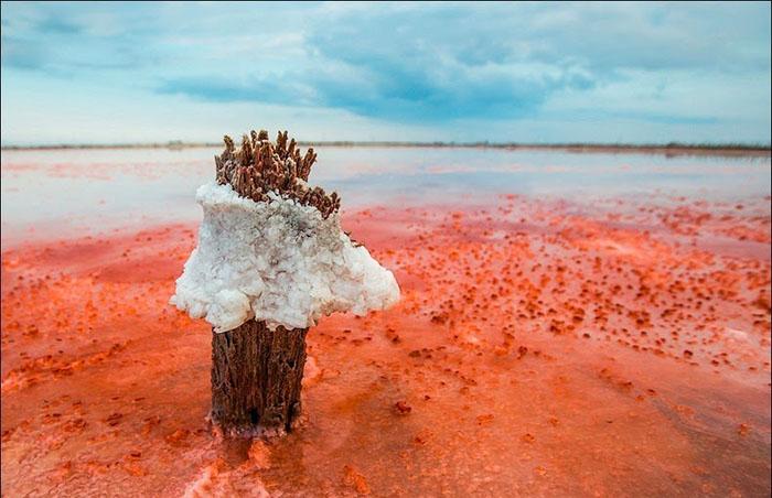 Соленые воды Сиваша.