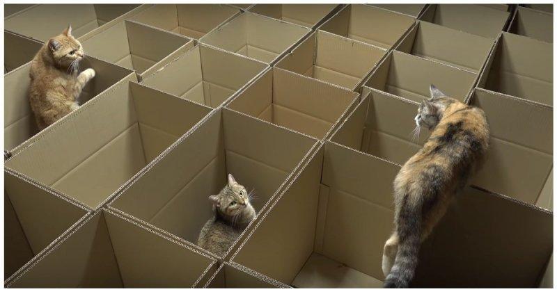 Как выглядит кошачий рай