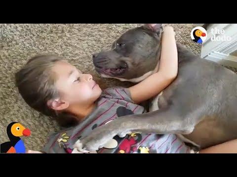 Питбуль просто влюблен в свою маленькую хозяйку. Только взгляните на них!