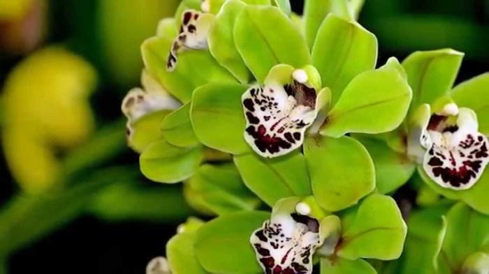 Зелёная орхидея. | Фото: stroy-podskazka.ru.