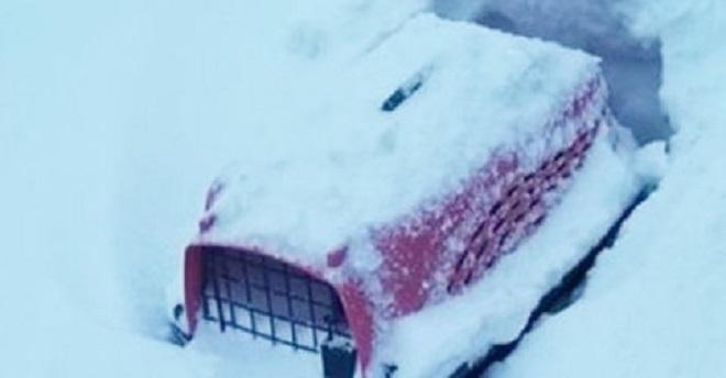 Найдя переноску для питомцев, засыпанную снегом, мужчина надеялся, что она пуста, но он ошибался