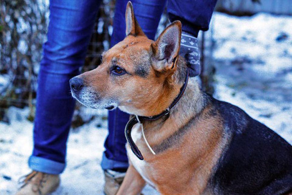 Волонтеры ищут дом собаке, которую спасли от убийства