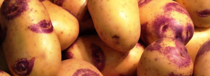 Картофель Иван-да-Марья: описание популярнейшего в народе сорта
