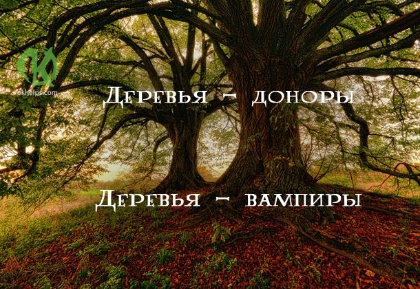 Деревья — доноры и деревья — вампиры