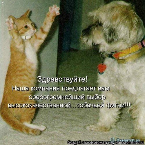 Юморная котоматрица 13
