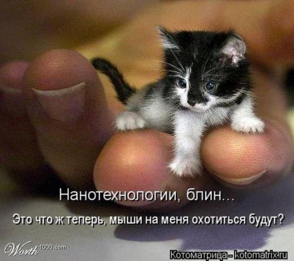 Все фото с маленькой мисю