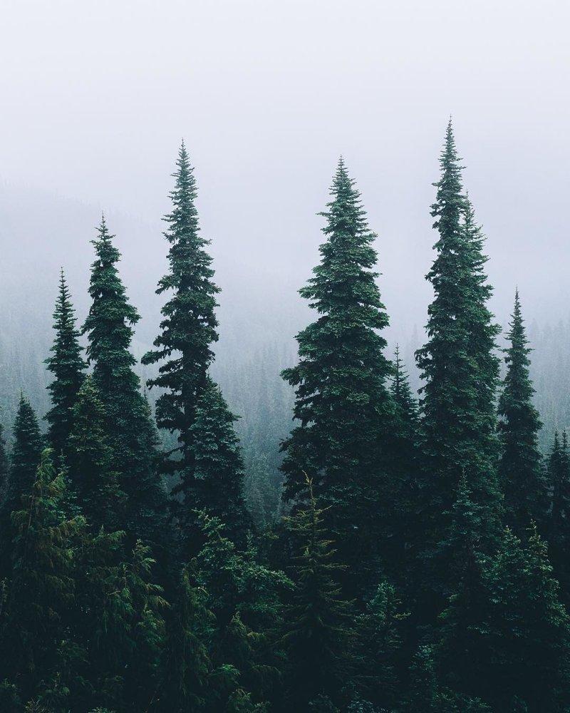 А давно ли вы гуляли в лесу? лес, отдых, природа, прогулки