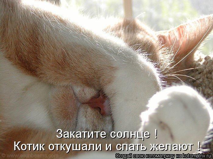 ЛЕТО ЖДУ!!! (котоматрица)