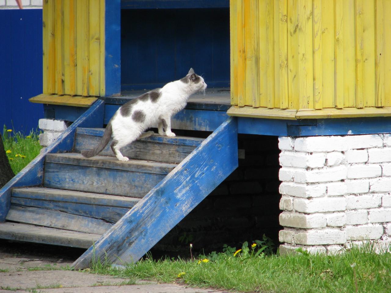 Братья наши меньшие: почему кошка поселилась именно в этом доме?