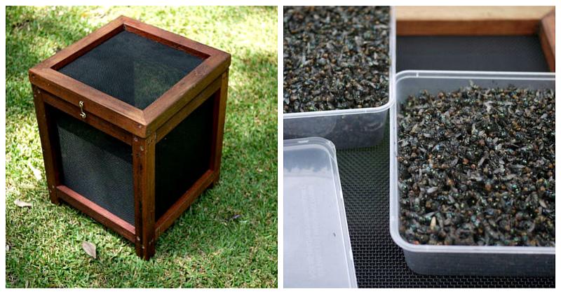 2,3 кило мух за неделю: как избавиться от насекомых на даче по австралийской методике