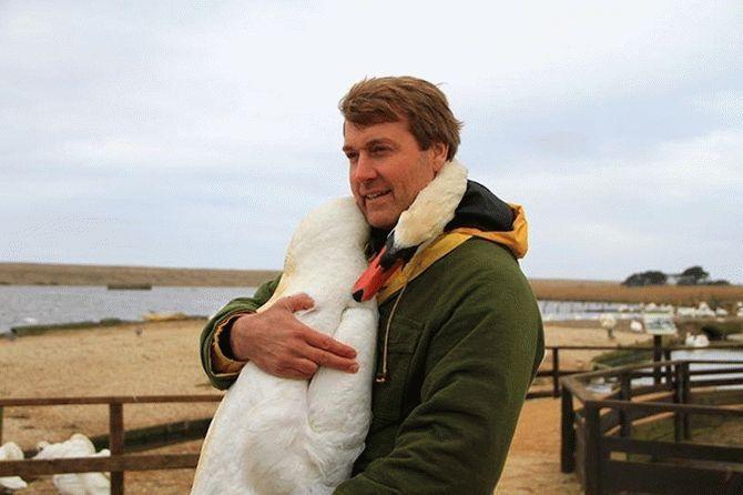 Мужчина спас лебедя и в благ…