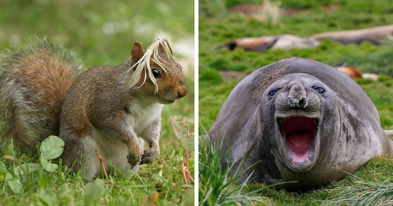 20 смешных фотографий животн…
