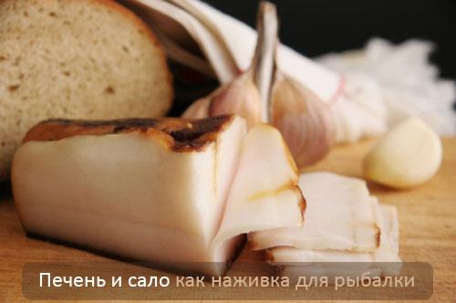 Печень и сало как наживка для рыбалки