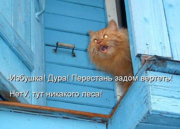 Любить кошку можно только на её условиях.