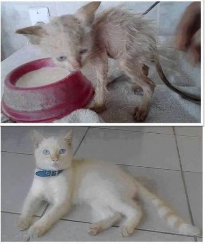 Мир не изменится из за спасения одной кошки , но для этой кошки мир изменился навсегда.