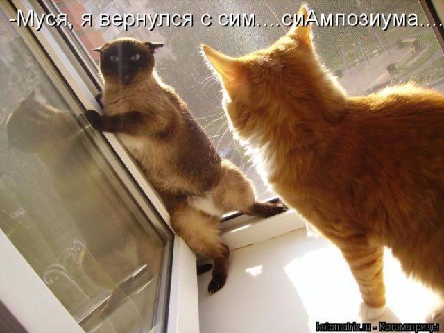 Уморительные котоматрицы за …