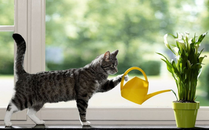 Как полить растения в своё отсутсвие