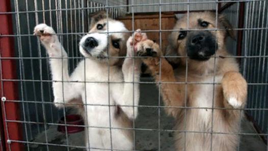 Недетская жестокость: в Карелии разгромлен приют для животных