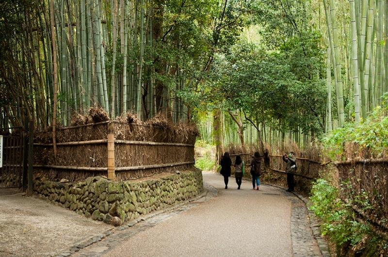 Бамбуковая роща Сагано. Развилка.