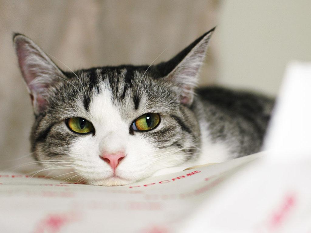 Что происходит с кошкой, когда ее забывают гладить