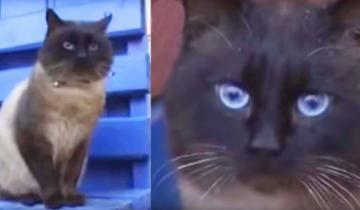 Кота вывезли на остановку и бросили. Но он сидит и ждет, верный как Хатико…