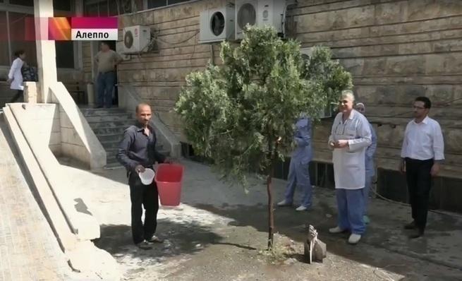 Сирия возвращает жизни