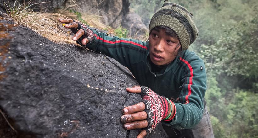Неизвестные Гималаи: в гостях у диких пчел
