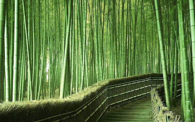 Бамбуковая роща Сагано. Лестница.