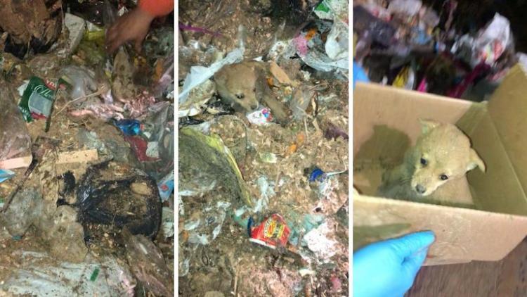 Рабочие голыми руками перебрали огромный контейнер мусора, чтобы спасти щенка
