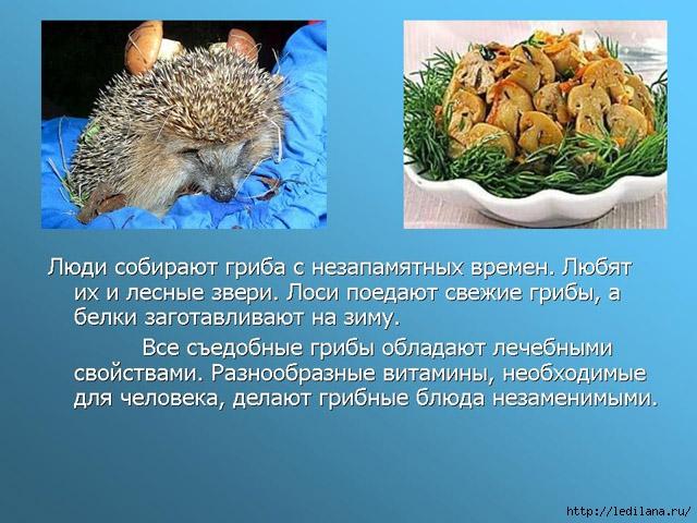 грибыи животные (640x480, 227Kb)