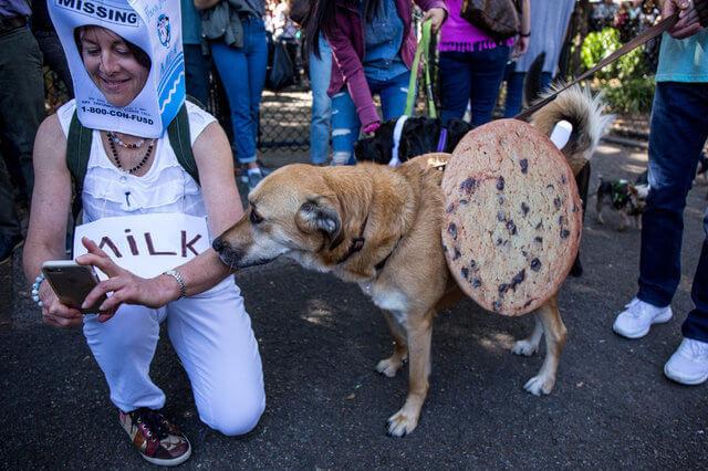 Парад собак на Хэллоуин