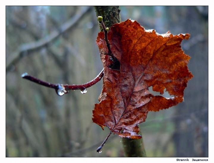 Улыбка ноября