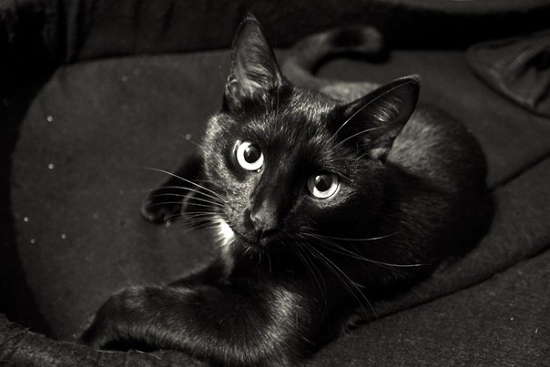Взрослый уличный кот с первых минут нашей встречи стал таким родным...