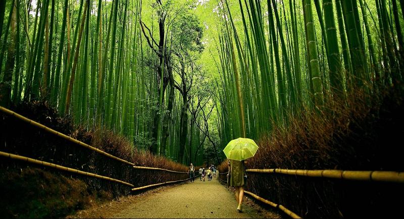 Прогулка по Бамбуковой роще Сагано
